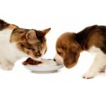 Храна за животни